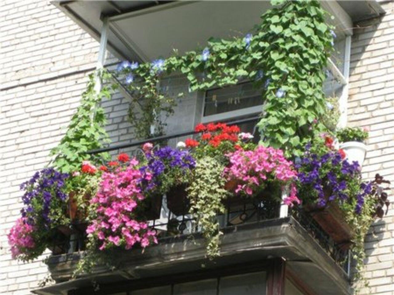 Мал, да удал: превращаем балкон в полезную жилую площадь / v.