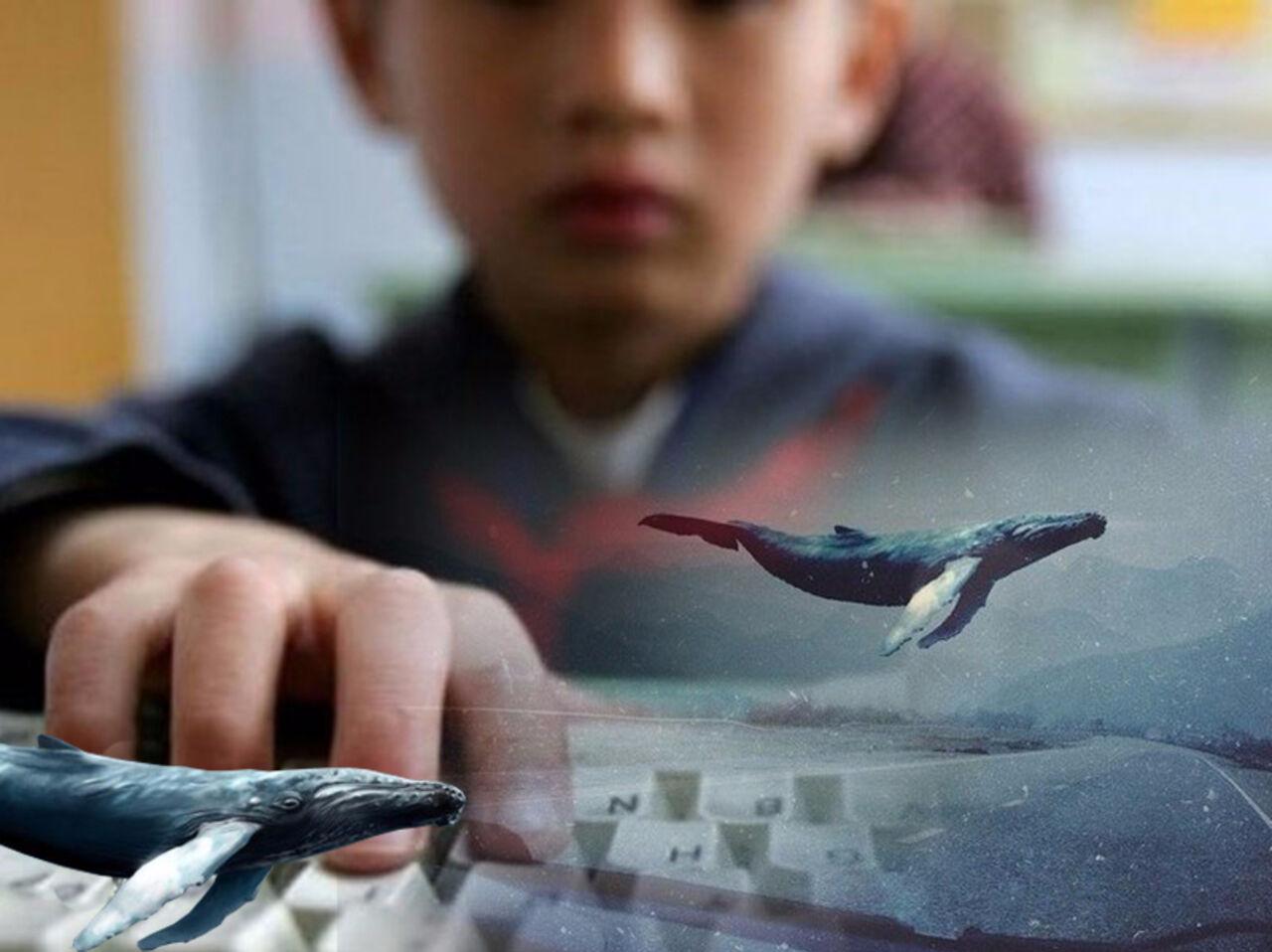 Власти Мексики сообщили опоявлении игры «Синий кит» в общегосударственном сегменте социальных сетей