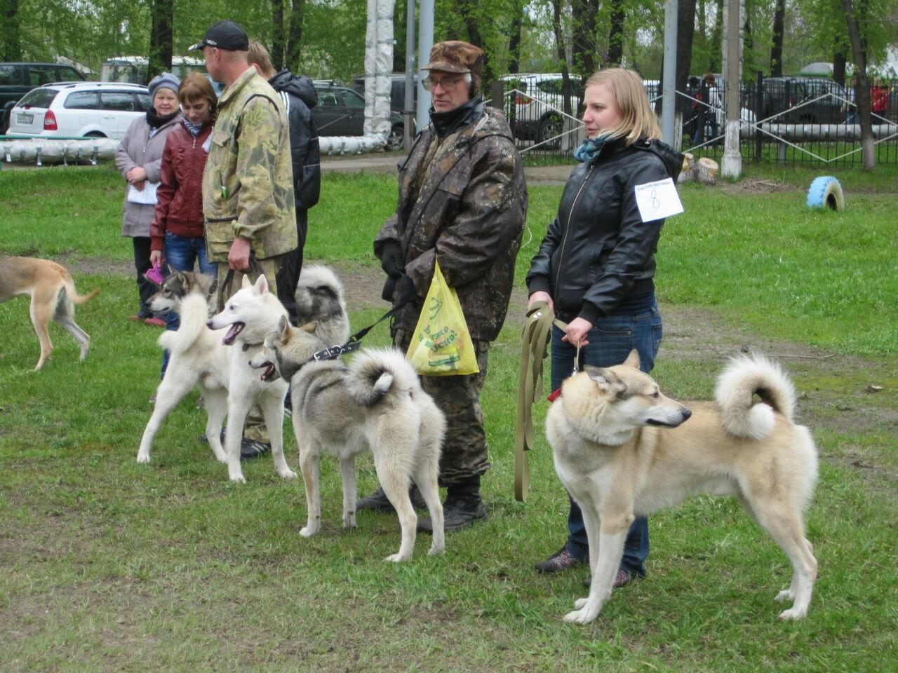 Выставка собак в санкт