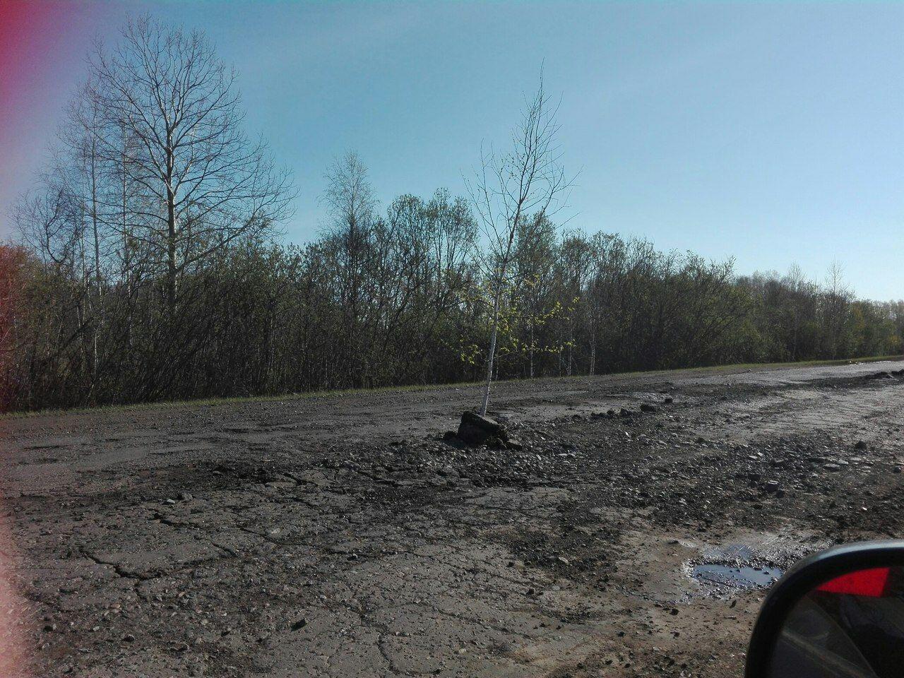 Вямах натрассе вОмской области посадили деревья