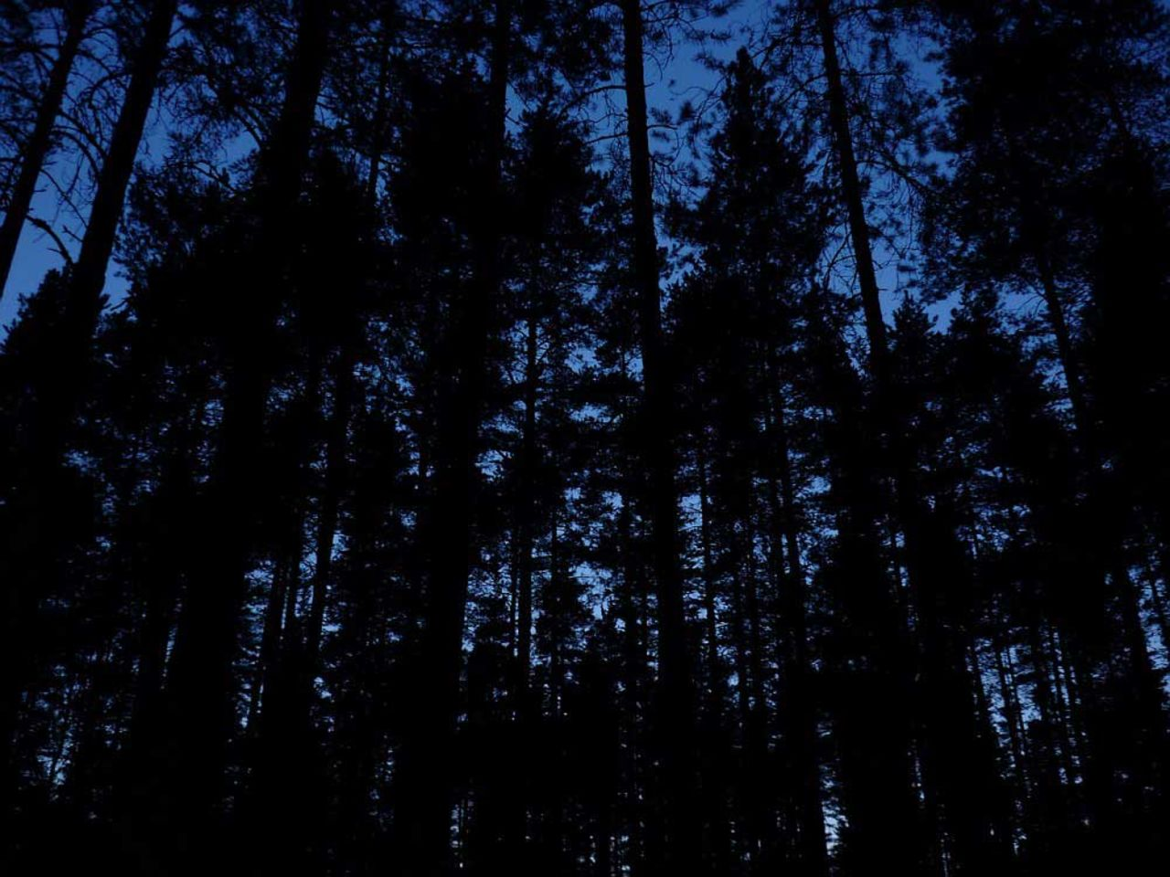 Мать ссыном заблудились вкузбасском лесу, сокращая путь отреки