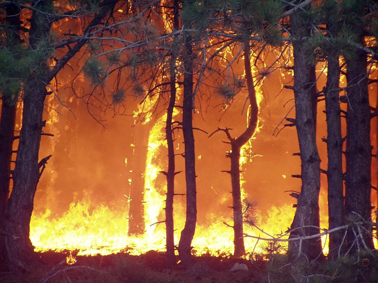 Предпосылкой запаха гари вНовосибирске стали томские пожары