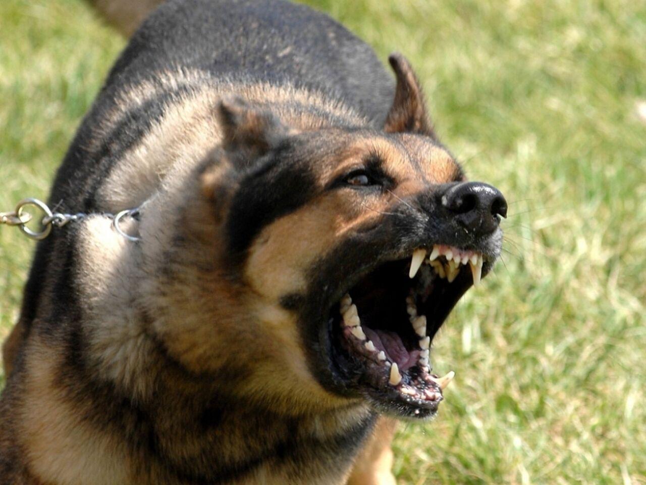 ВНовосибирске собачка напала на6-летнюю девочку