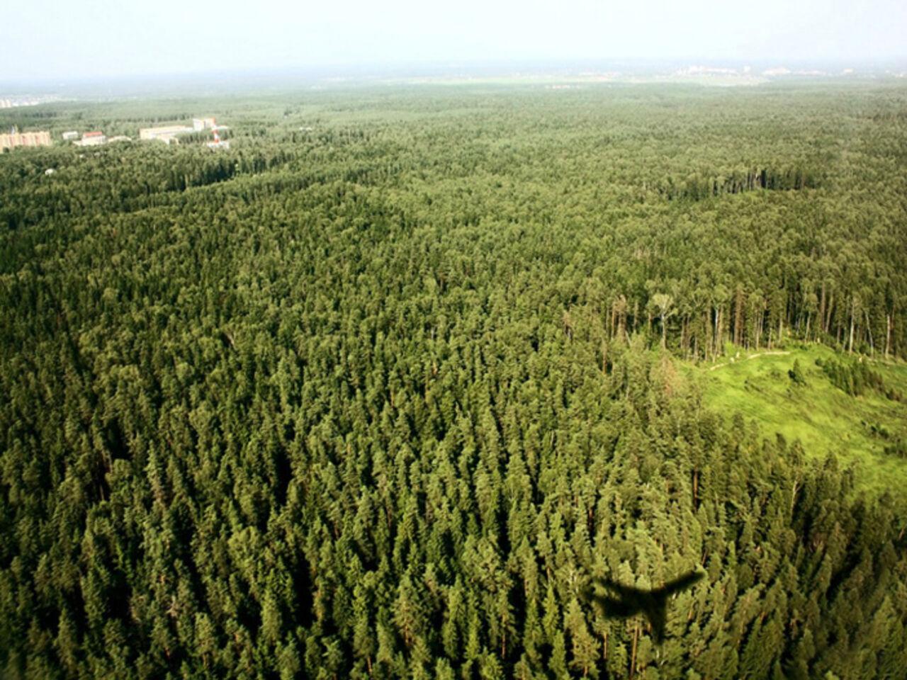 ВAir France раскрыли причину слива топлива над лесом встолице франции