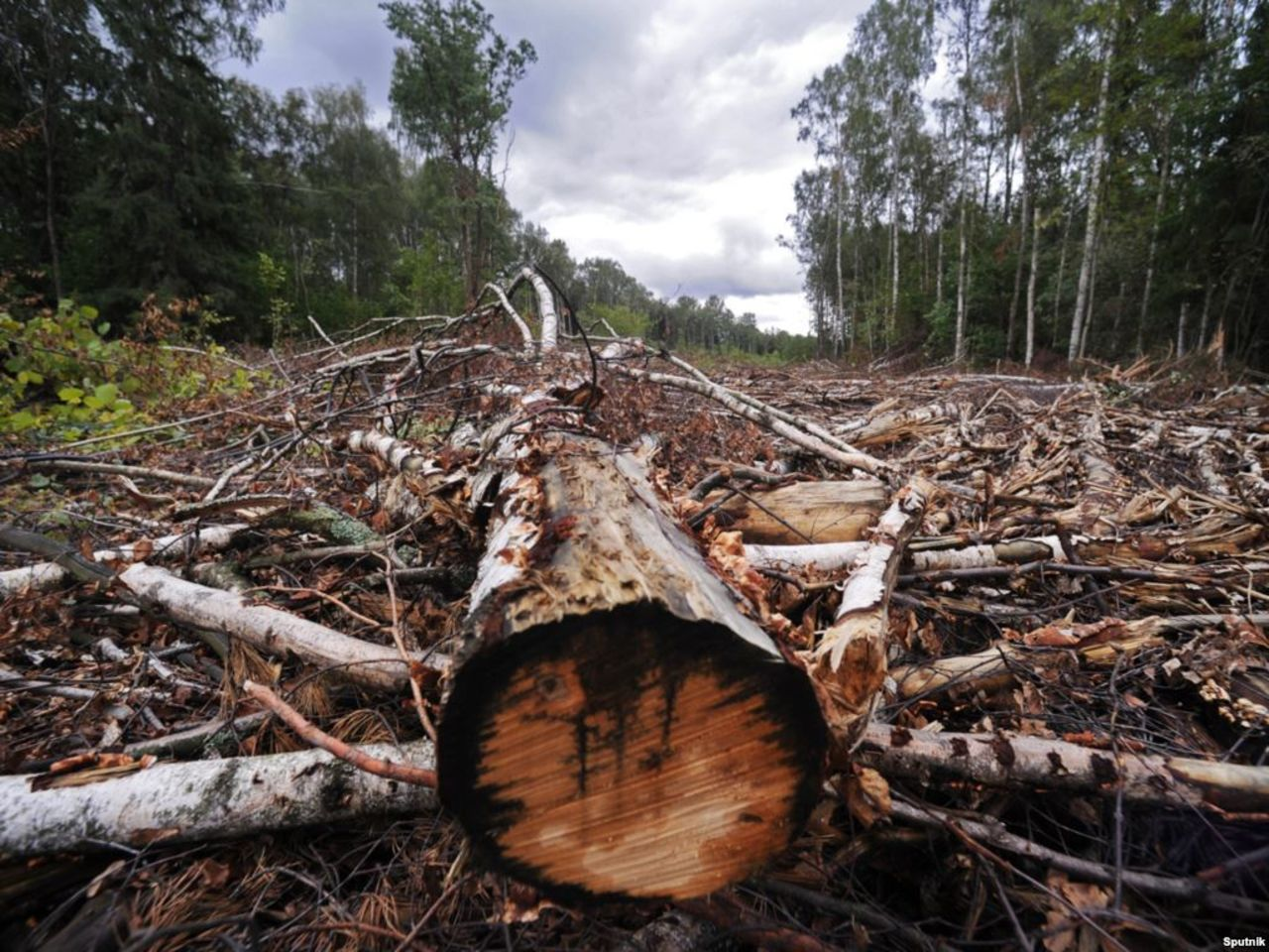 Лесной браконьер чуть незадавил полицейского вТомской области