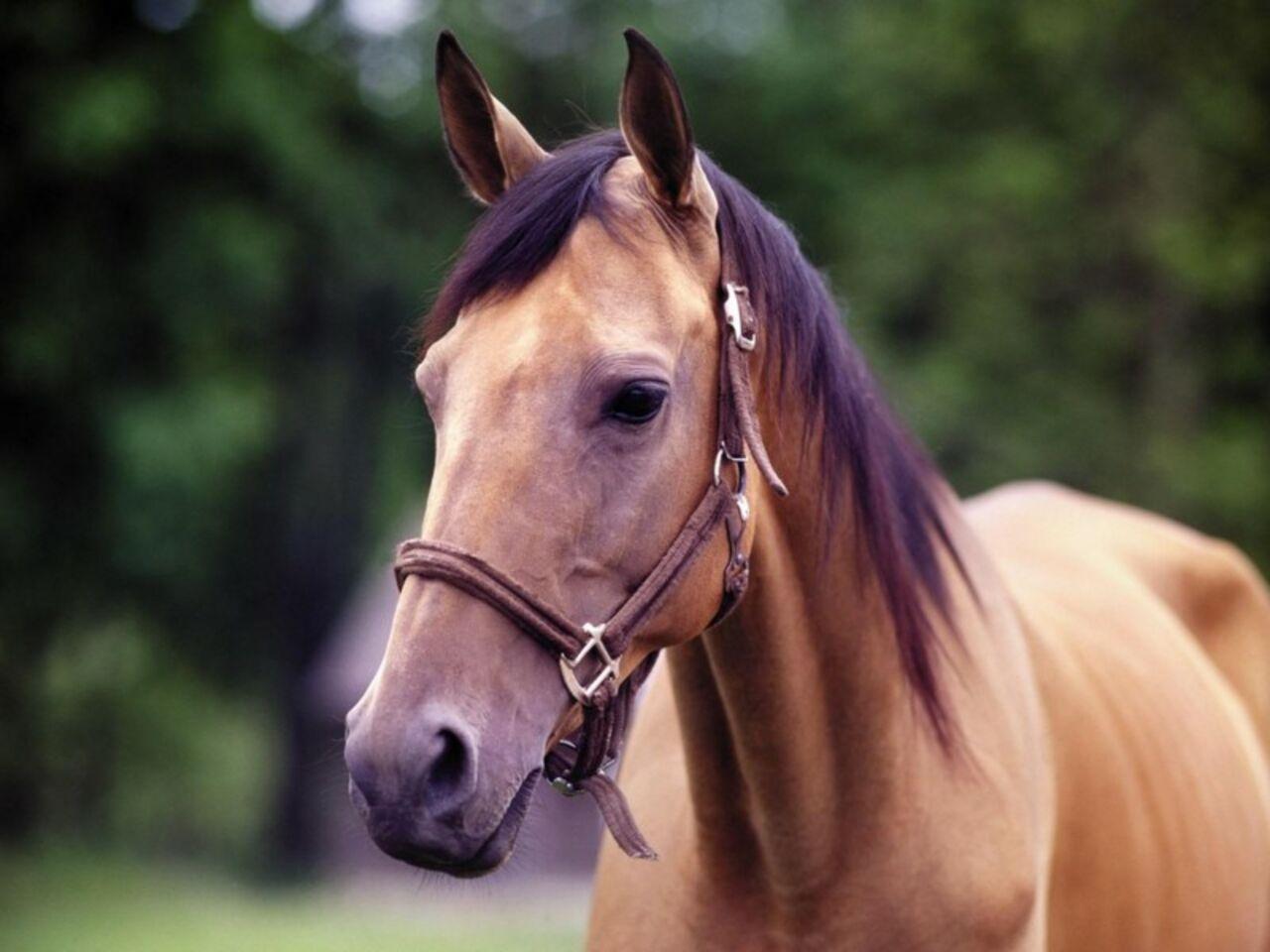 ВПрокопьевске цыганка обворовала пенсионерку, чтобы приобрести коня