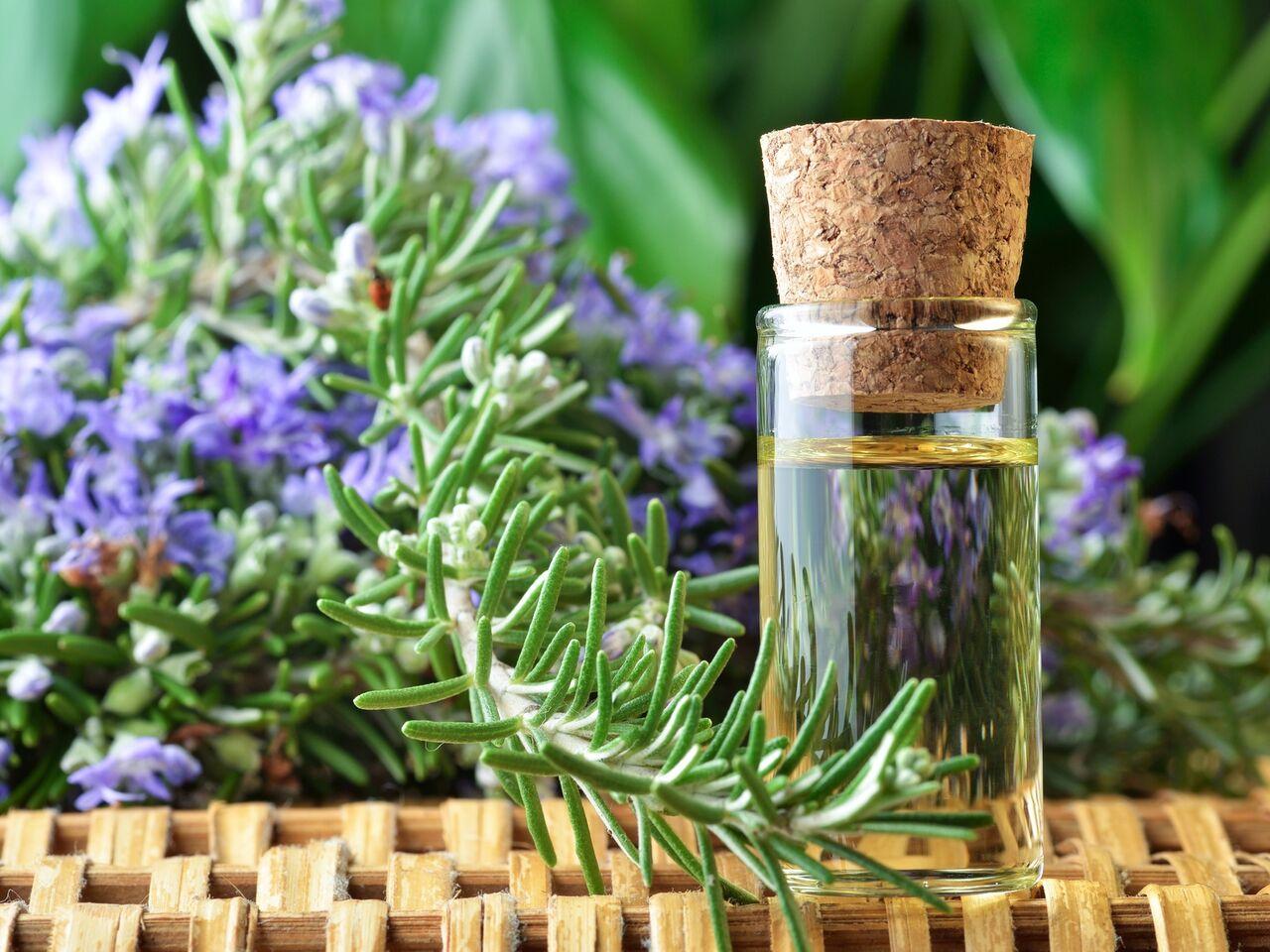 Ученые: Запах розмарина улучшает человеческую память