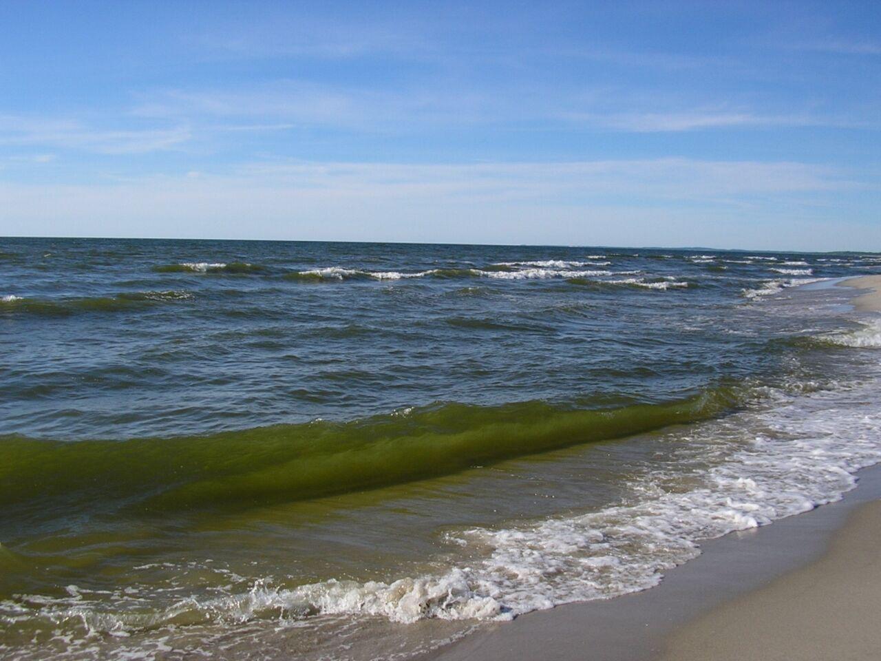 Всему живому вБалтийском море грозит кошмарная опасность
