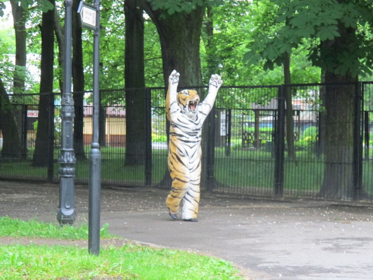 Амурского тигра учились ловить вКалининградском зоопарке