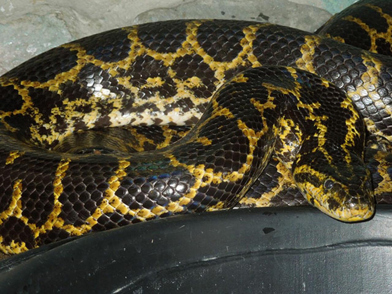 ВКузбассе находится самая старая змея в Российской Федерации