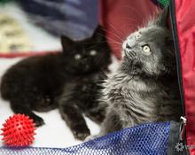 Международная выставка: кошек, котиков и котят много не бывает!