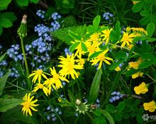 Май в Сосновом бору: цветущая зелёная зона Кемерова