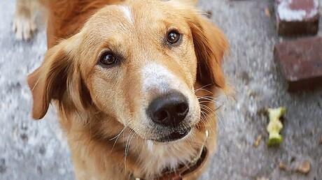 Премьера наЛайфе: трейлер фильма «Собачья жизнь» отрежиссёра «Хатико»