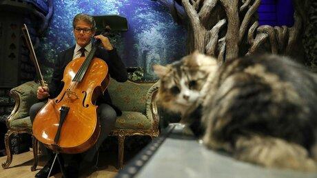 Возникла «мурлыкающая» музыка для кошек