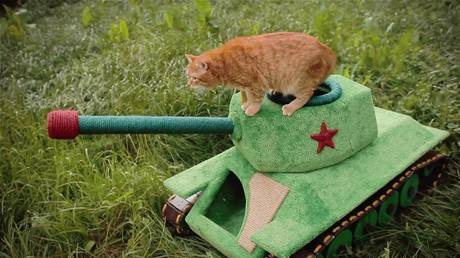 Самоходный танк для кошки собрал новосибирский инженер