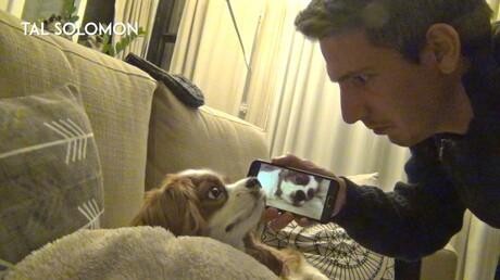 Пользователь интернета отыскал способ отучить своего пса отхрапа