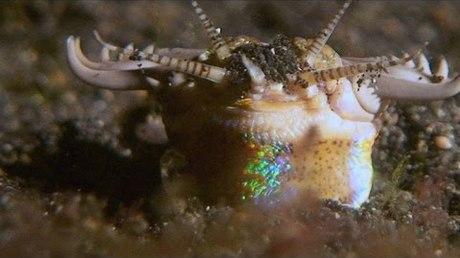 Ученым удалось снять навидео ужасного подводного червя-убийцу