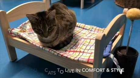 ВКанаде бездомным котам подарили мини-кровати
