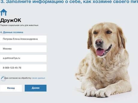 В «Одноклассниках» появилась соцсеть для животных «ДружОК» при поддержке Nestle