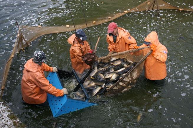 работа в рыболовном хозяйстве в московской области