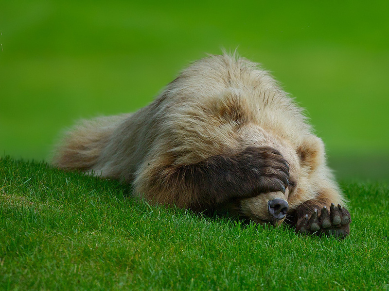 Медведь забрался в дачный дом, перепугал хозяев и съел кастрюлю борща