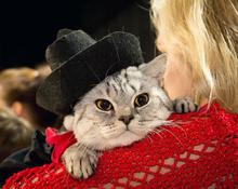 Выставка кошек в Кемерове