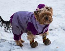 В столицу Кузбасса приходит зима