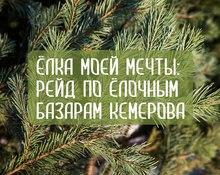 Ёлка моей мечты: рейд по ёлочным базарам Кемерова