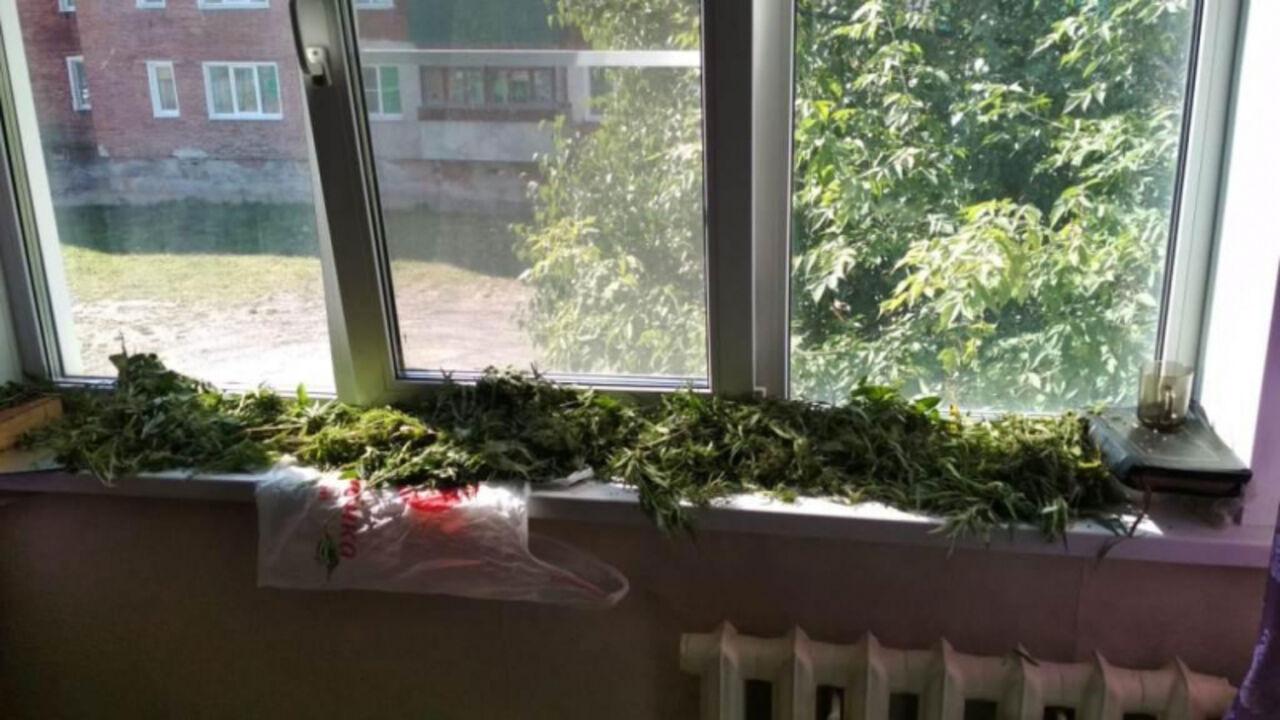 Марихуану на подоконнике мика ньютон любовь марихуана скачать