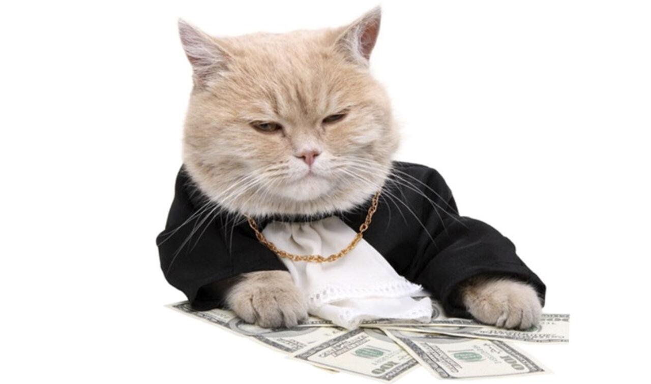 картинки кот с деньгами
