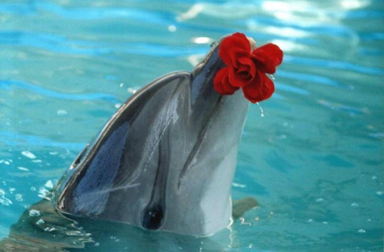 Зарубежные ученые в ходе наблюдений за приматами и дельфинами пришли к выводу что любовь появилась из-за инстинкта отца защищать своёпот