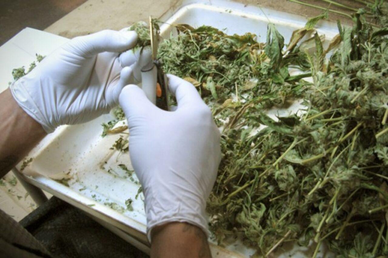 Как приготовить из конопли химию дорогие семена канабиса