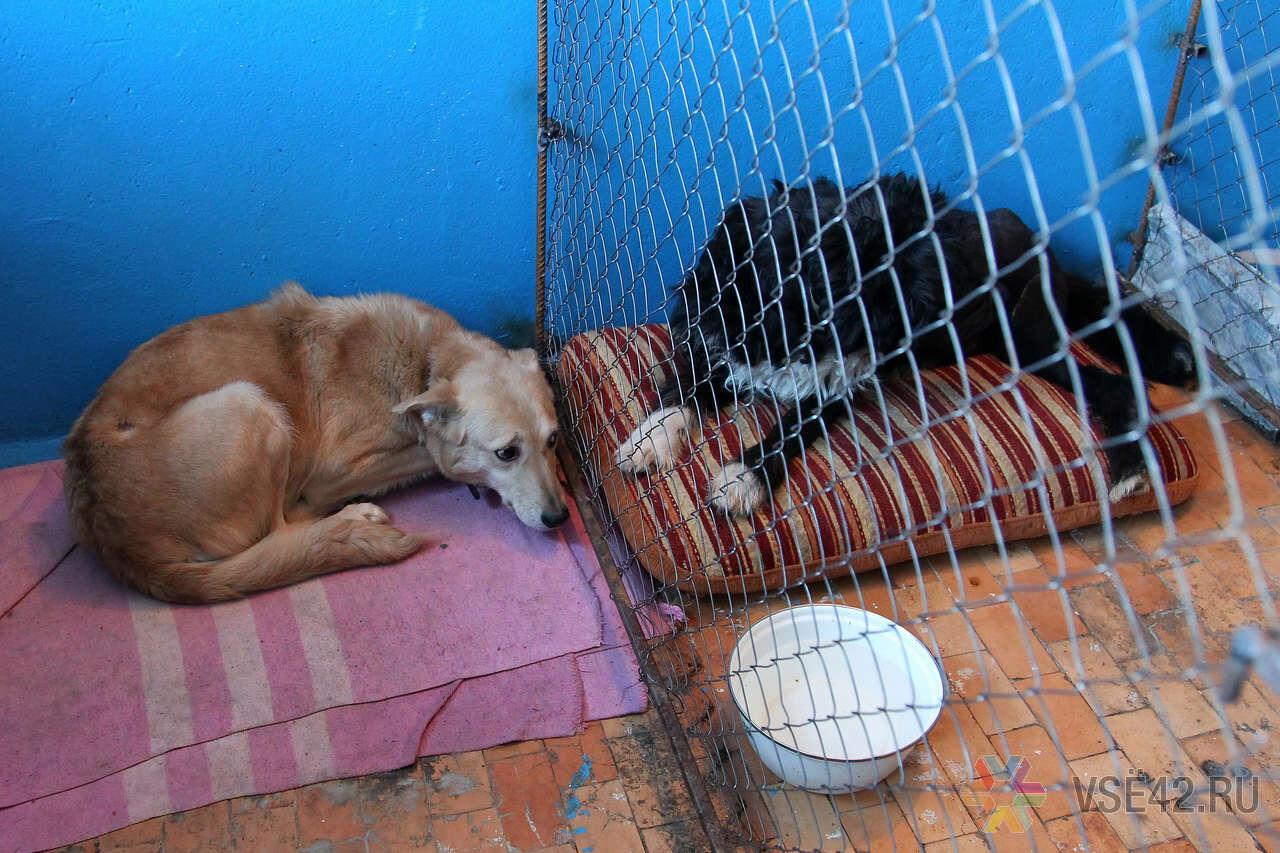 Приюты для бездомных животных фото