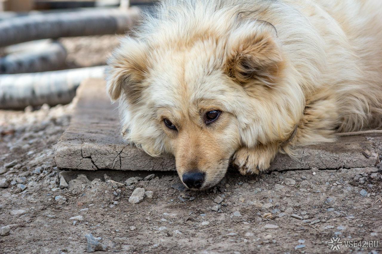 Открытки, прикольные картинки бездомных собак