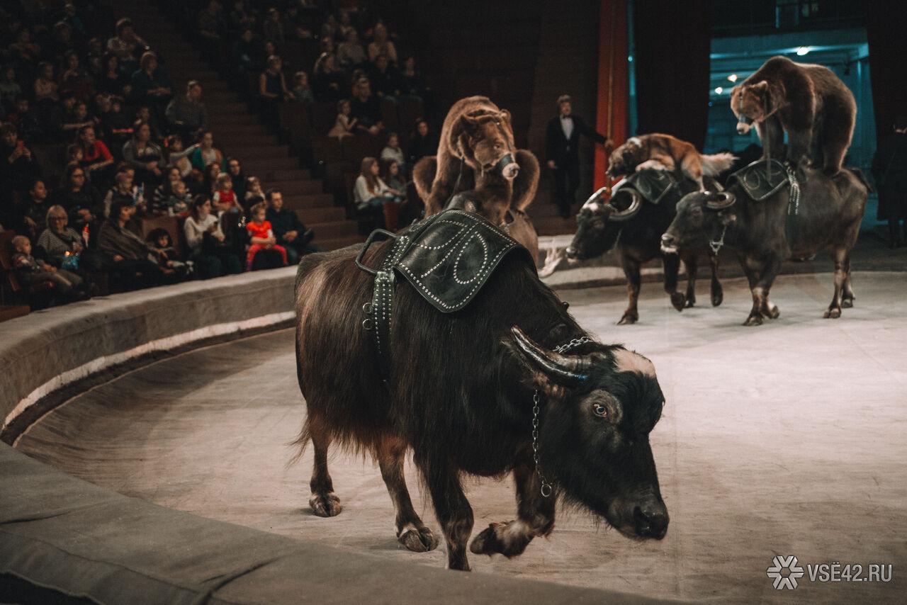 все фото цирка медведи на буйволах уралкерамика керамическая плитка