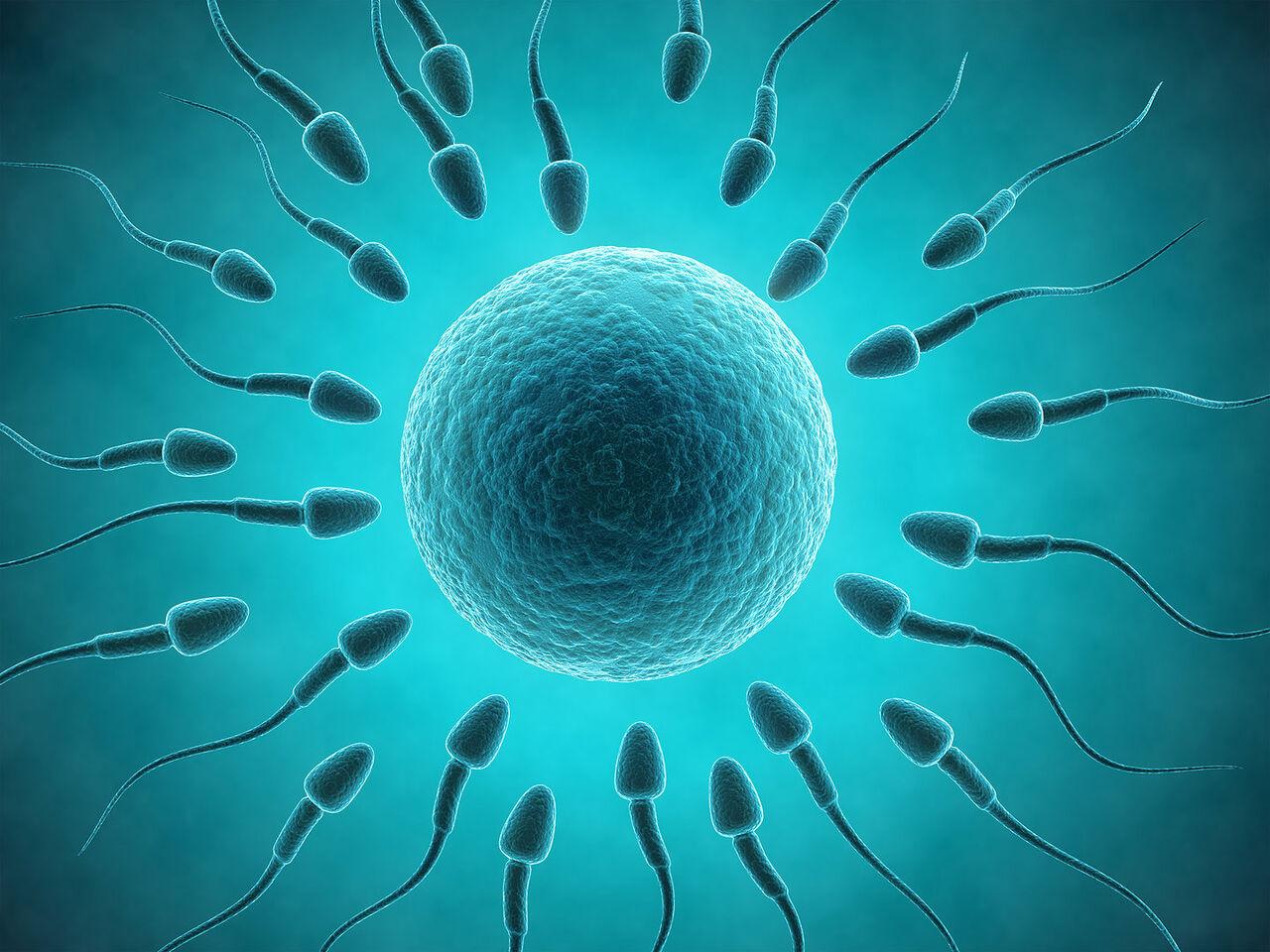 Сперматозоиты качество