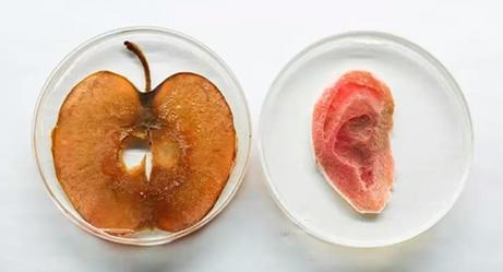 Ученые смогли превратить яблоко в человеческое ухо