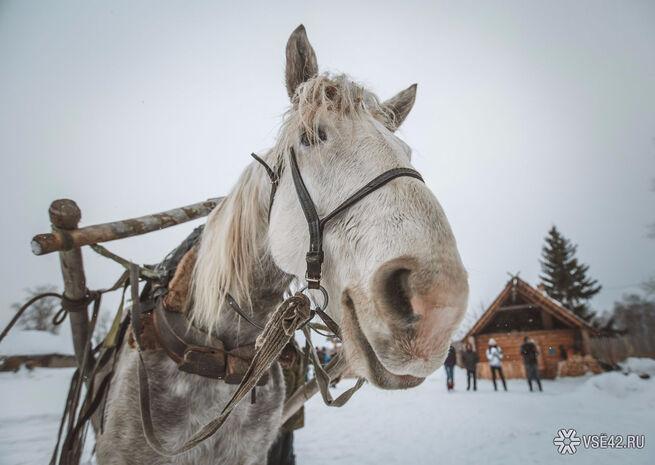 Кузбассовцев приглашают бесплатно прокатиться на лошадях  Ui-5a4f43dac8a026.76059325